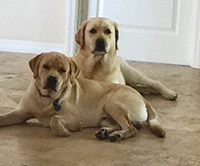 Beau and Buddy